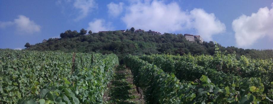Vignes sous Château Chalon